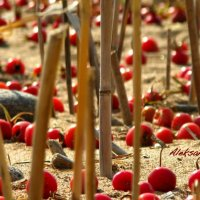 berries on the sand :: Alexandra Osen'