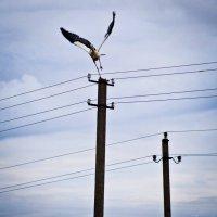Finding a balance. :: Artem Ryzhykov