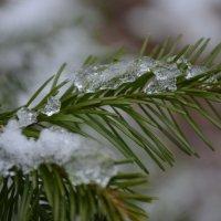Первый снег :: Анна Ермак
