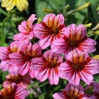 Мамины цветочки :: Анна Ермак