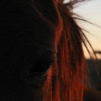 На закате дня :: Ann _V_