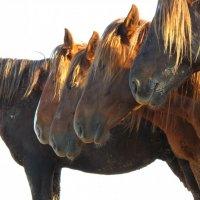 Одичавшие лошади Маныча :: Ann _V_