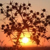 The thorny sunrise. :: Artem Ryzhykov