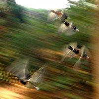 Wingspan. :: Artem Ryzhykov