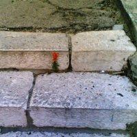 Всегда есть надежда :: Mихай Оршанский