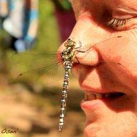 dragonfly :: Alexandra Osen'