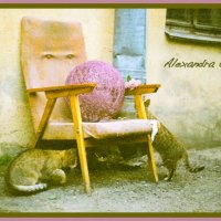 Cats of Saint Petersburg :: Alexandra Osen'