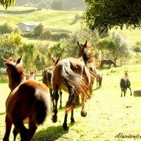 horses run :: Alexandra Osen'
