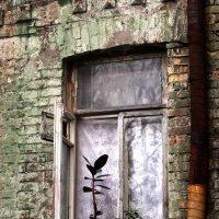про зеленый дом :: Вероника Сидоренко