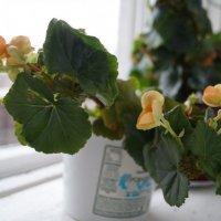 растение на окне) :: Дима Яблоко