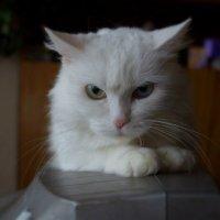 Моя кошка :: Дима Яблоко