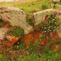 цветы на камне :: Мариям Хаджиева