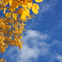 взгляну на небо :: ольга березовская