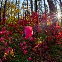 Осень в лесу :: Yury Petrov