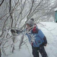 снегопад с деревьев :: Татьяна Панчихина