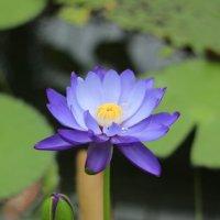 ..цветок :: Konstantin Ivanov