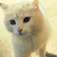 Кошка :: Татьяна Фролова