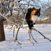 зимний кот :: Василий Шевцов