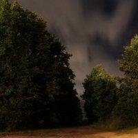 Ночные деревья :: Олег Волков
