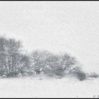 Снег и ветер :: DR photopehota