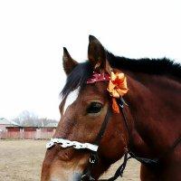 Лошадь :: Наташа Белоусова