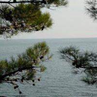 взгляд в даль :: Алена Засовина