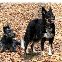 Мои собаки :: Тамара Солдатова