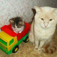 кот и кошка :: Юлия Кобелева