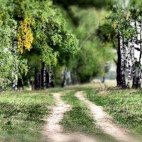 Эх дороги, дороги... :: Сергей Михайлов