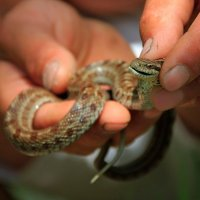 Змея :: Марина Лелюх