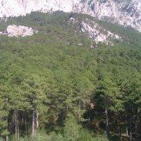 Густой лес :: Маша Зиновьева