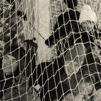 Детки в клетке! :: Дмитрий Арсеньев