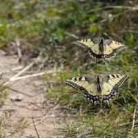 эффект бабочки :: сергей ершов
