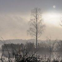 Утро,туман и тишина :: сергей ершов