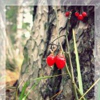 В осеннем лесу... :: Лена L.