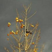 Уж, небо осенью дышало... :: Алексей Бубнов