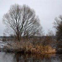 Островок на реке :: Светлана Ульянова