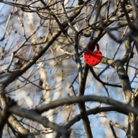 Красный :: Sergey Kuznetcov