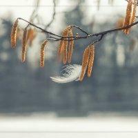 Прилетела весна... :: Ирэна Мазакина