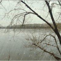 Первый дождь :: galina tihonova