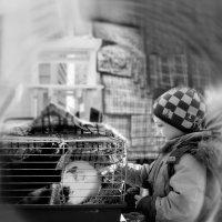Коллажи , Реставрация фотографий :: Евгений Мергалиев