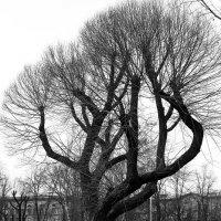 Дерево чб :: Valerii Ivanov
