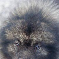 Добрый пес :: Денис Мясников
