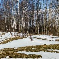Март :: Людмила Финкель