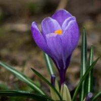 Улыбка весны :: Олег Козлов