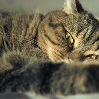 Мне всегда было интересно о чем думает моя кошка.... :: Елена Соловьёва