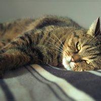 Мне всегда было интересно о чем думает моя кошка... :: Елена Соловьёва