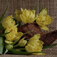 желтые тюльпаны :: Наталья Крюкова
