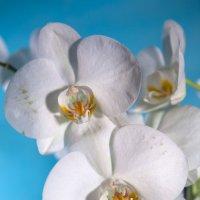 Цветы :: Михаил Савастинкевич