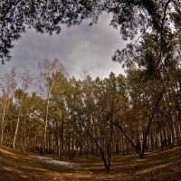 Весенний лес :: Elena Vershinina